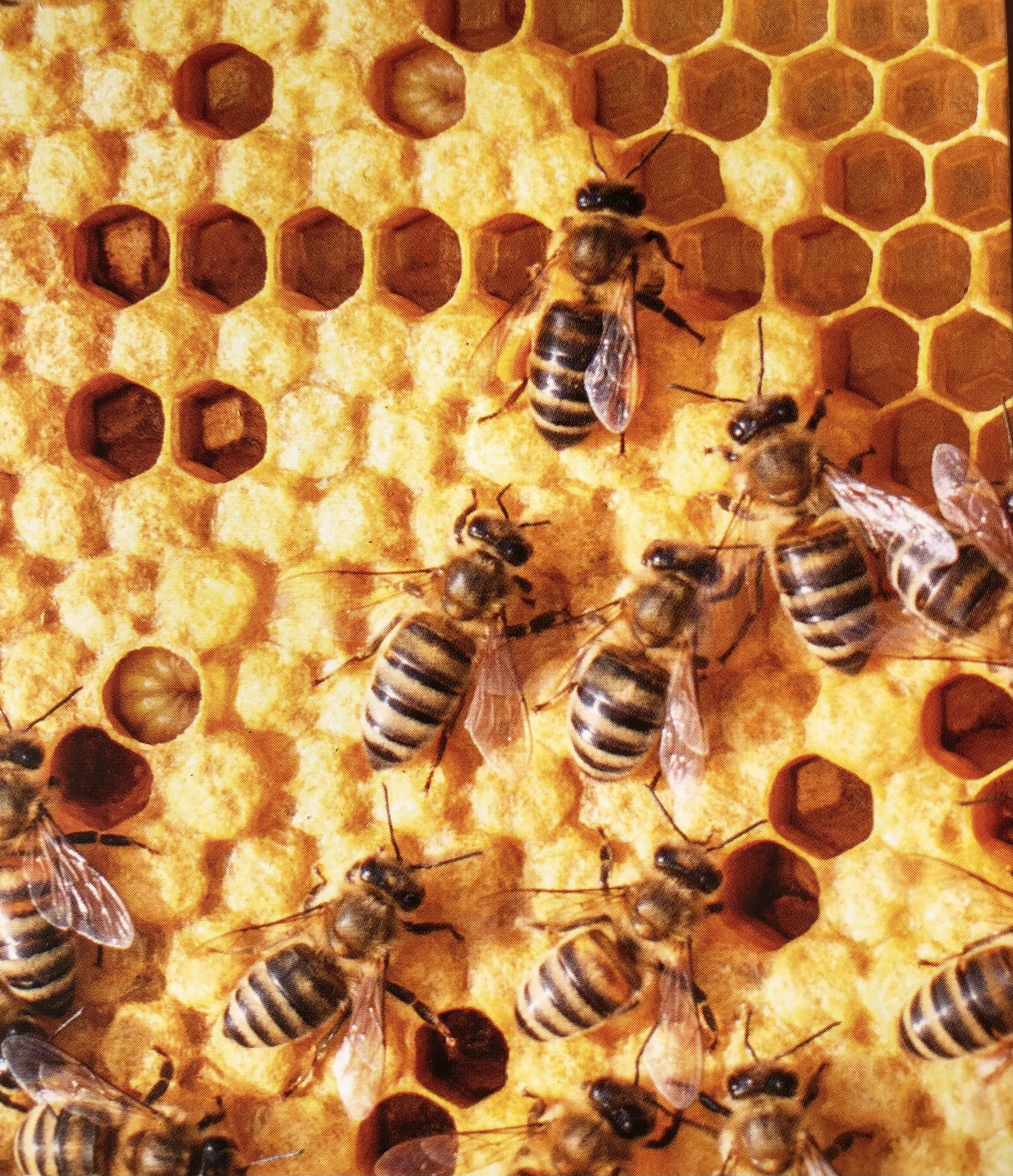 Im Bienenstock 01